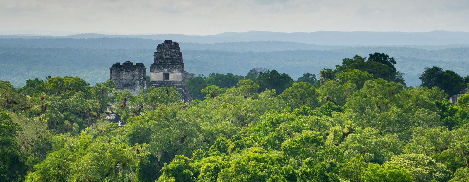 南美洲风景:鳄梨的自然栖息地