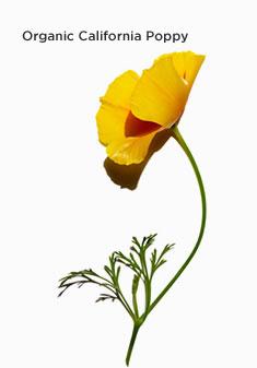 加州罂粟花