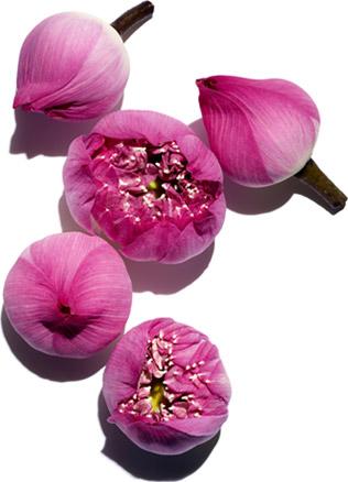 神圣的莲花