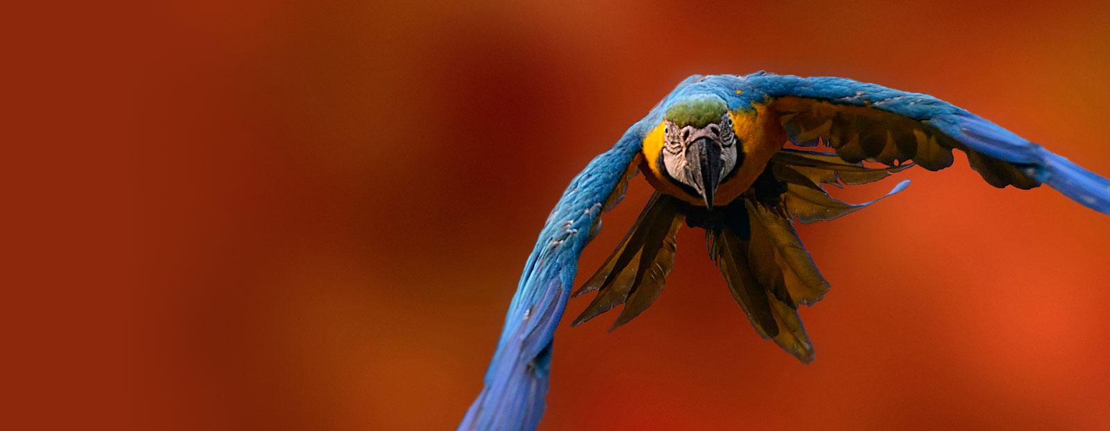 瓜拉纳的自然栖息地