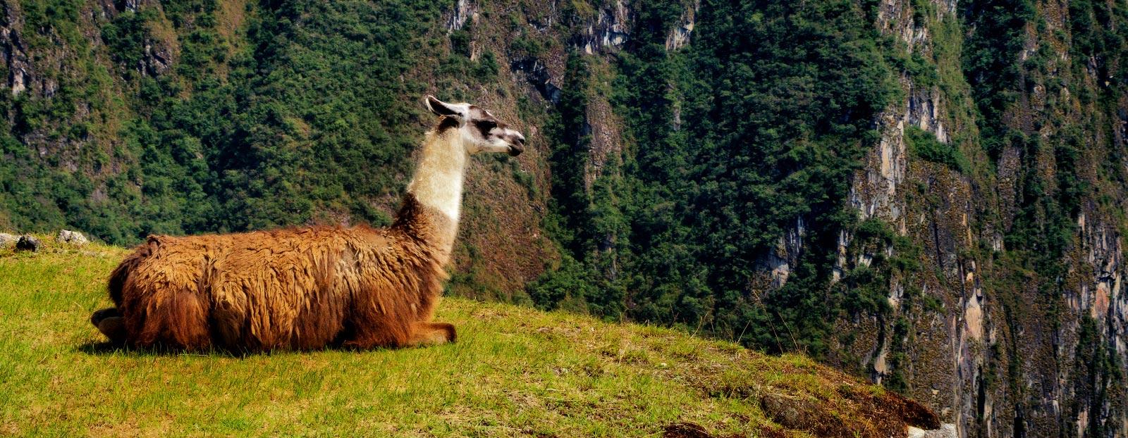 Peru landscape: natural habitat of quinoa