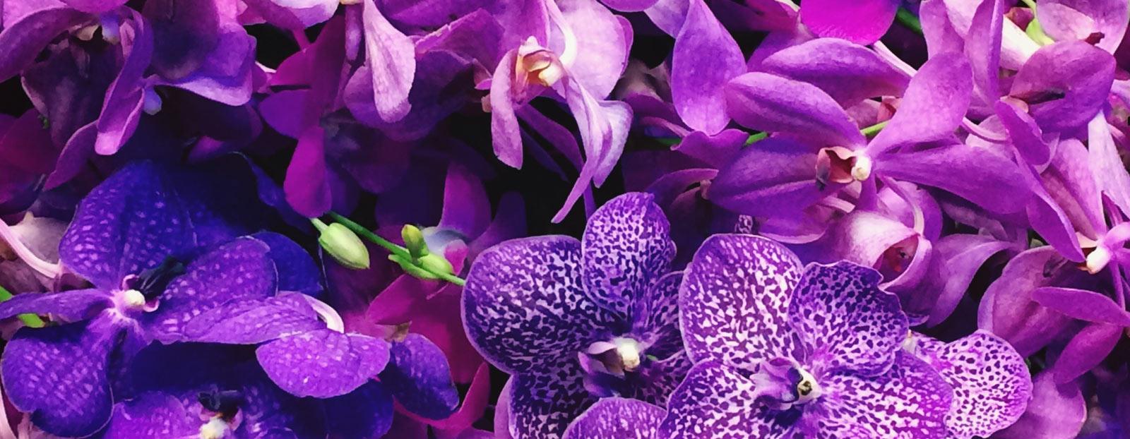 在自然栖息地生长着的兰花