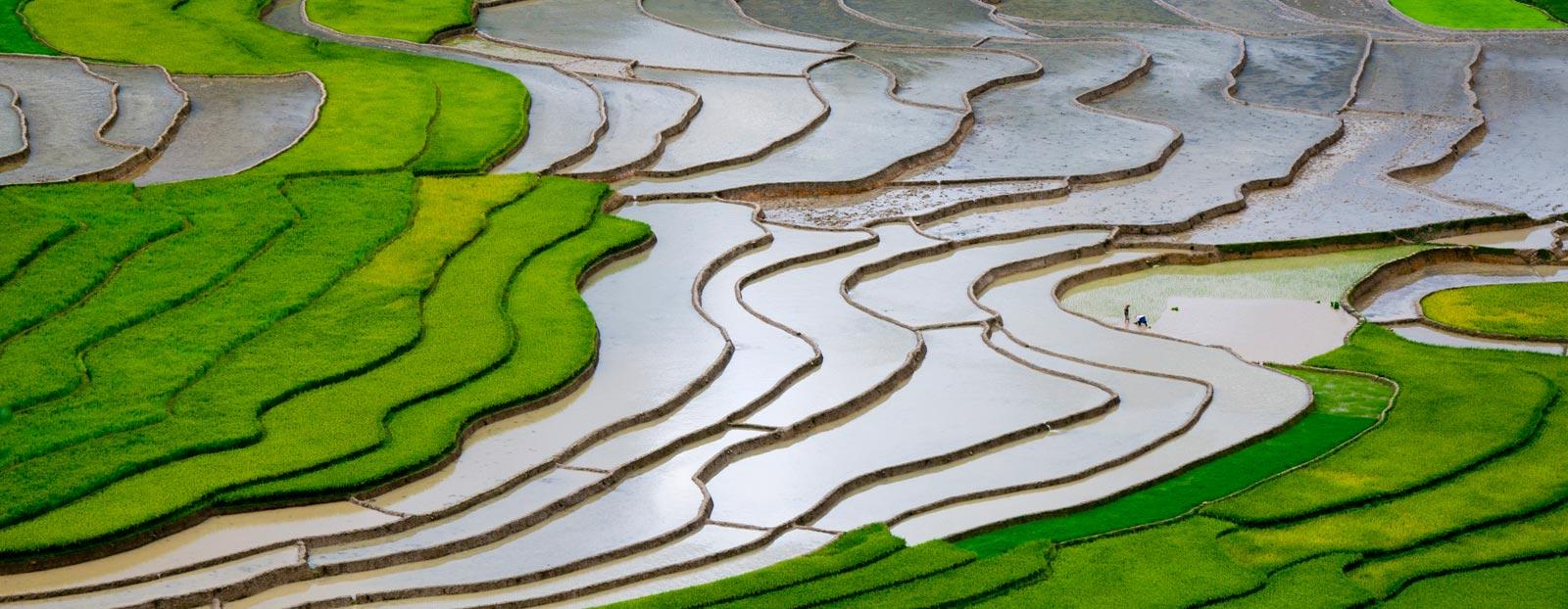 稻米的自然栖息地