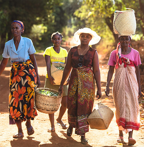 Women carrying baskets of plants in a local community where Clarins' sources raw ingredients