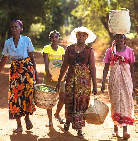 在娇韵诗植物成分的采收地,当地妇女们手提装满植物的篮筐