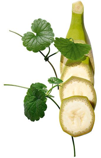 Plantes Banane Bio et Centella asiática
