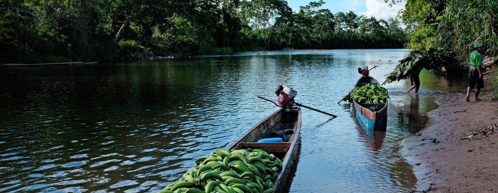 香蕉树的自然栖息地