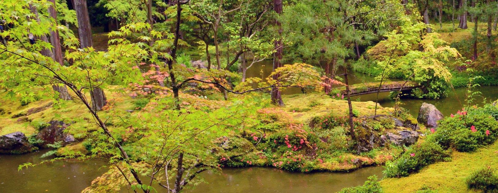 在自然栖息地生长着的合欢树