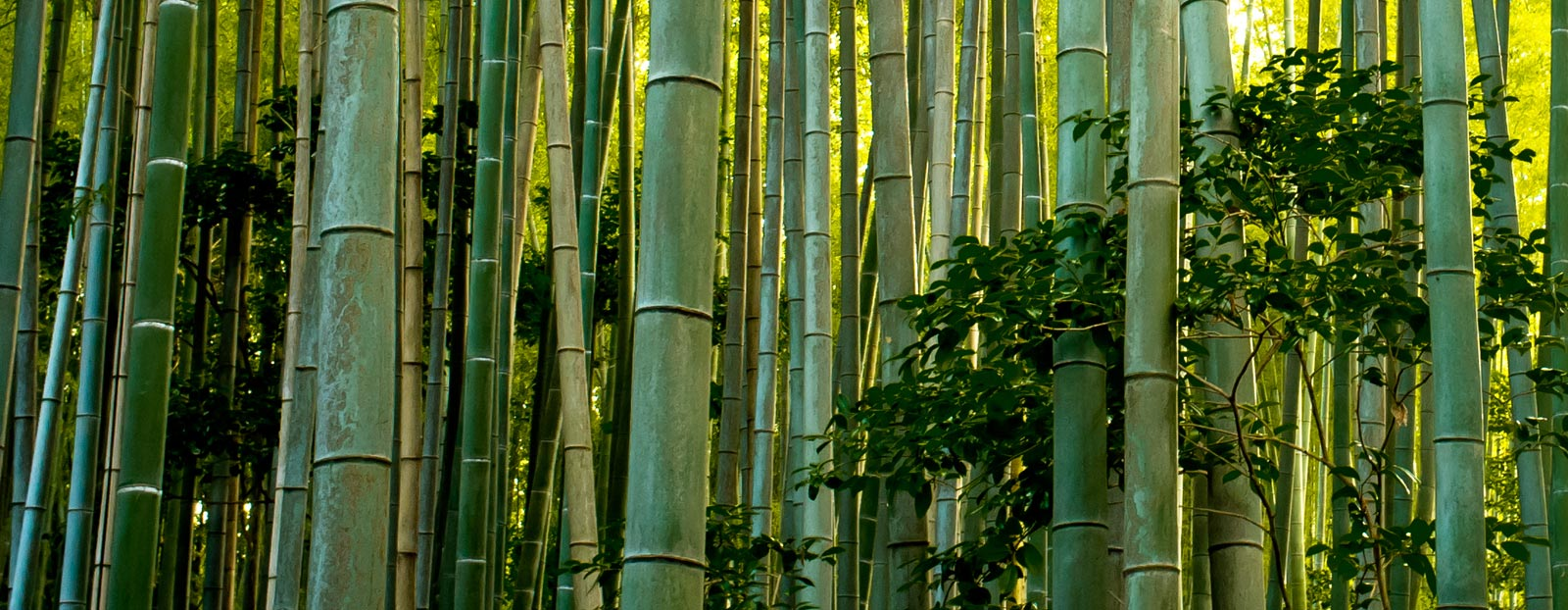 Bamboo in its natural habitat