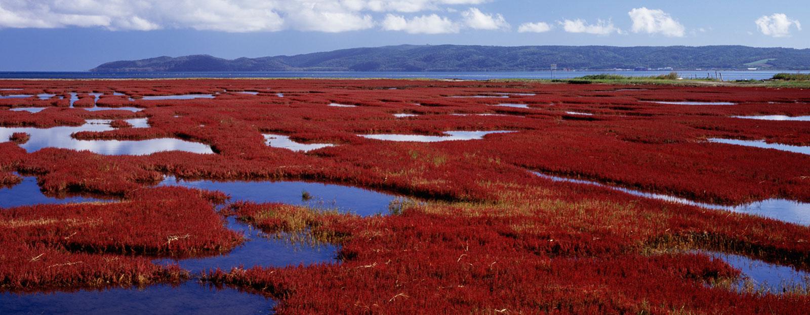海蓬子的自然栖息地