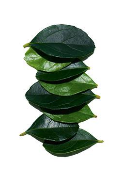 Wintergreen extract ingredient