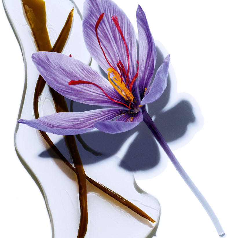 Algae - Organic saffron flower o