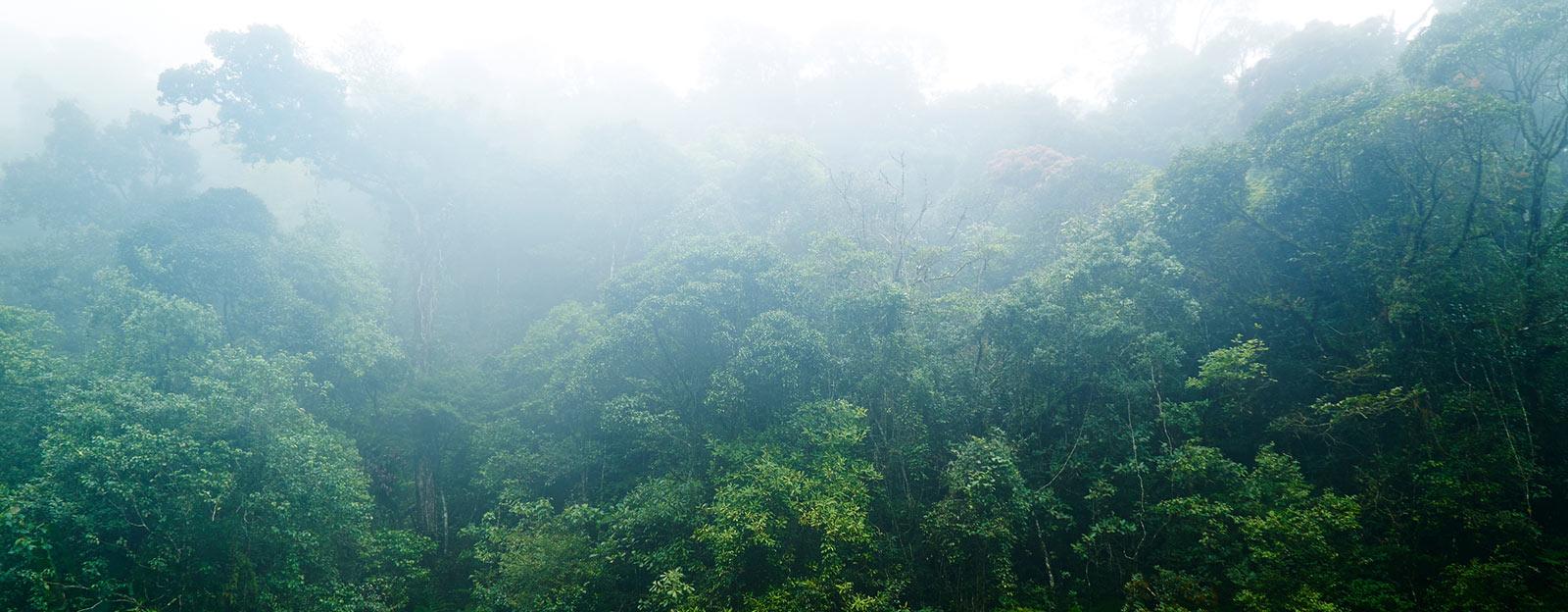 Bocoa in its natural habitat