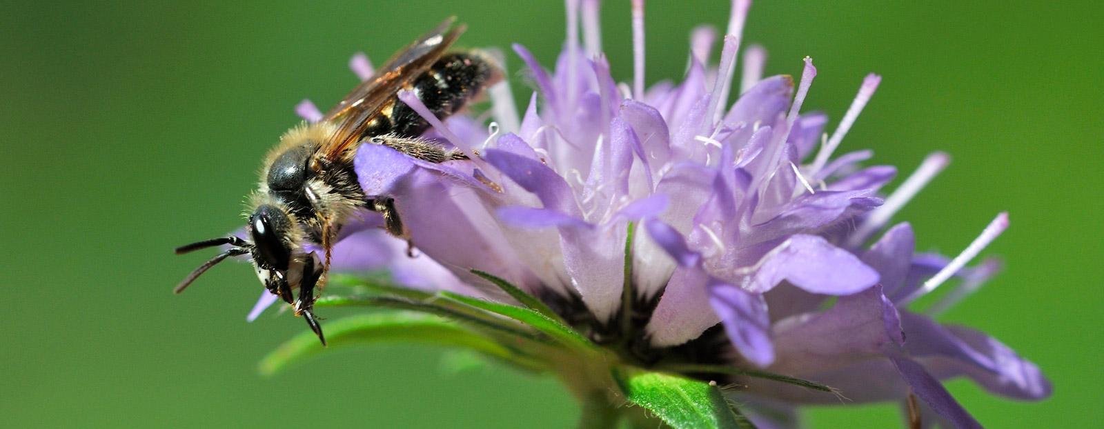 在自然栖息地生长着的冠笄花