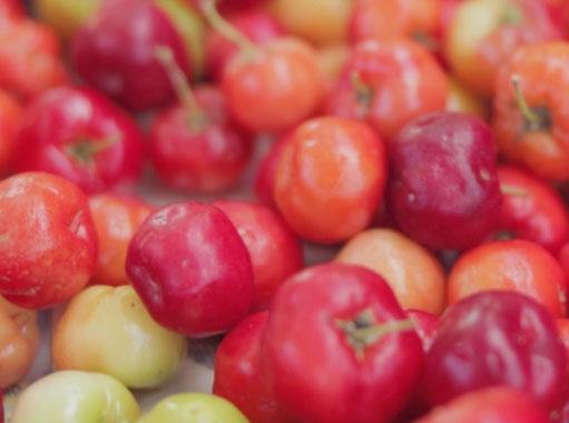 acerola berry