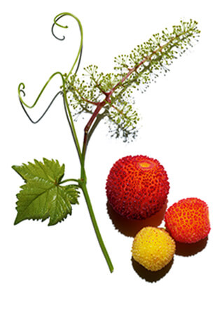 arbutus and vine ingredients