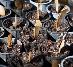 Pur Projet plants